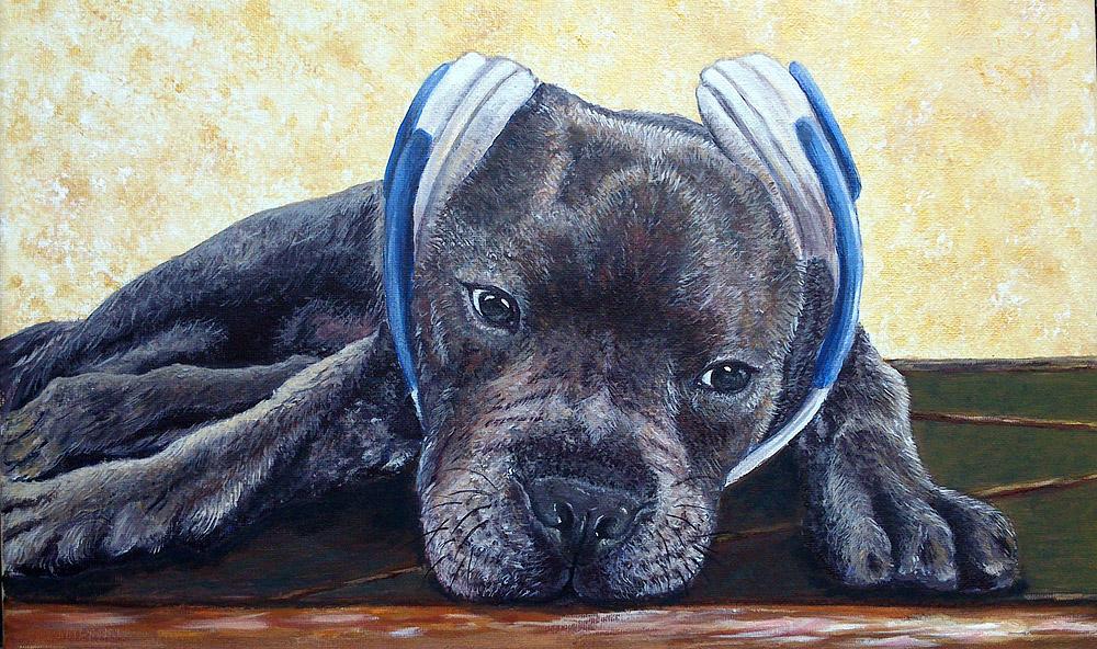 Pitbull - Acrilico su tela 30x40